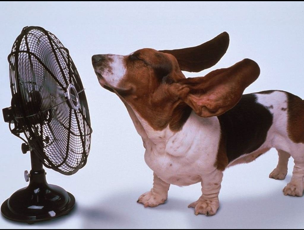 Завтра — жара. Корочка дыни ох как поможет!