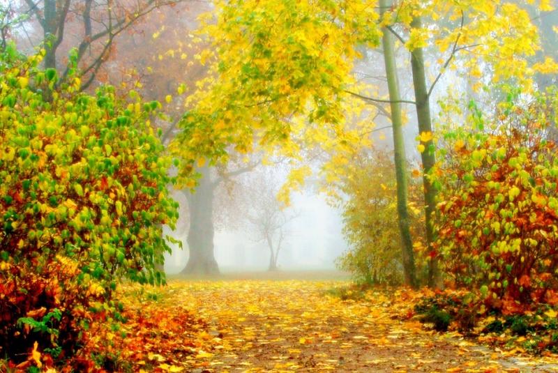 Погода на первые выходные осени: в некоторых областях еще лето
