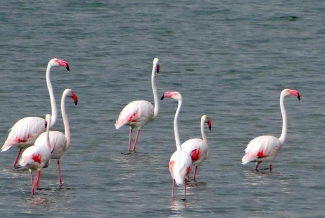 Таких гостей у нас не было никогда: красивейшие птицы облюбовали озеро в Украине