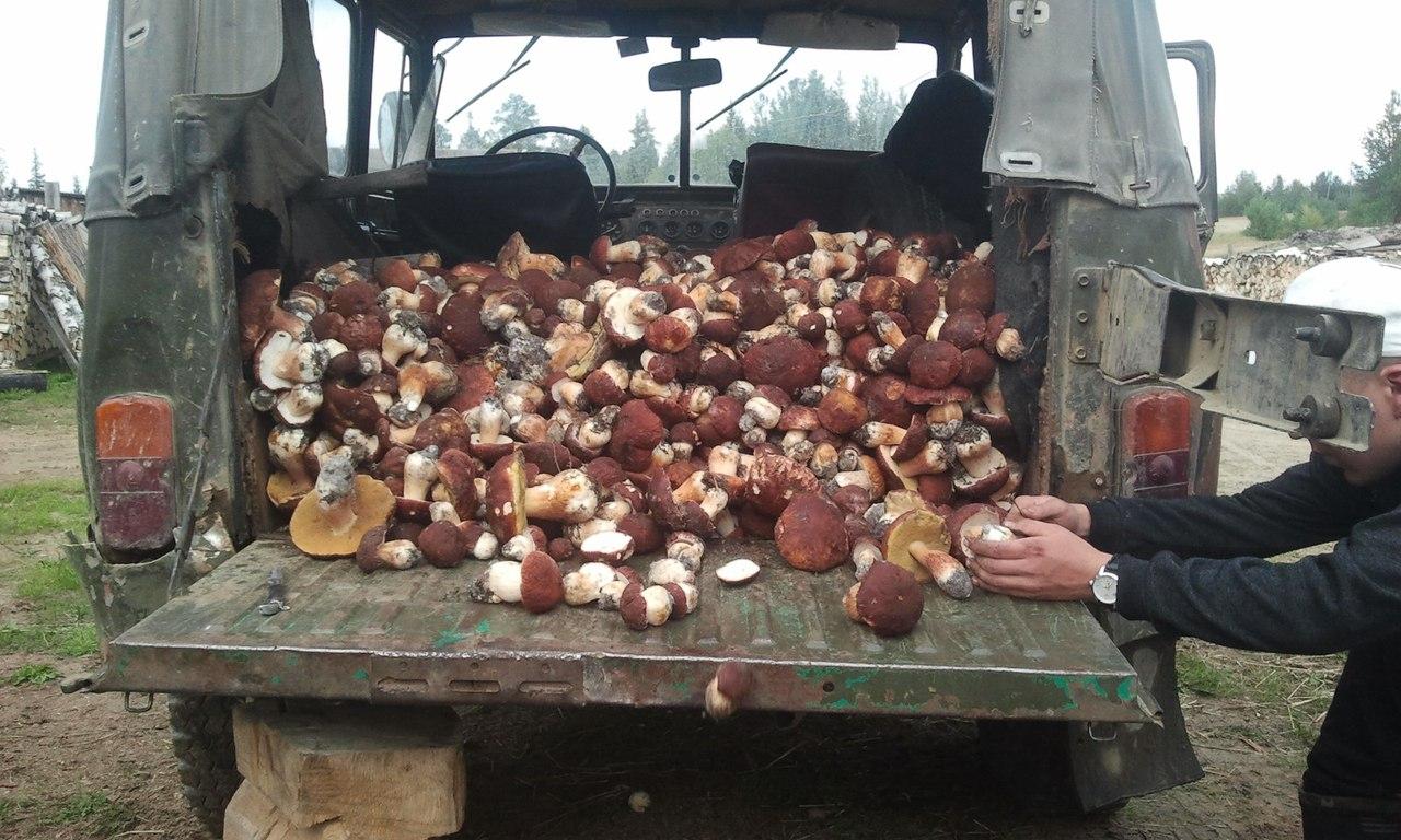 Примета: много грибов – это к войне