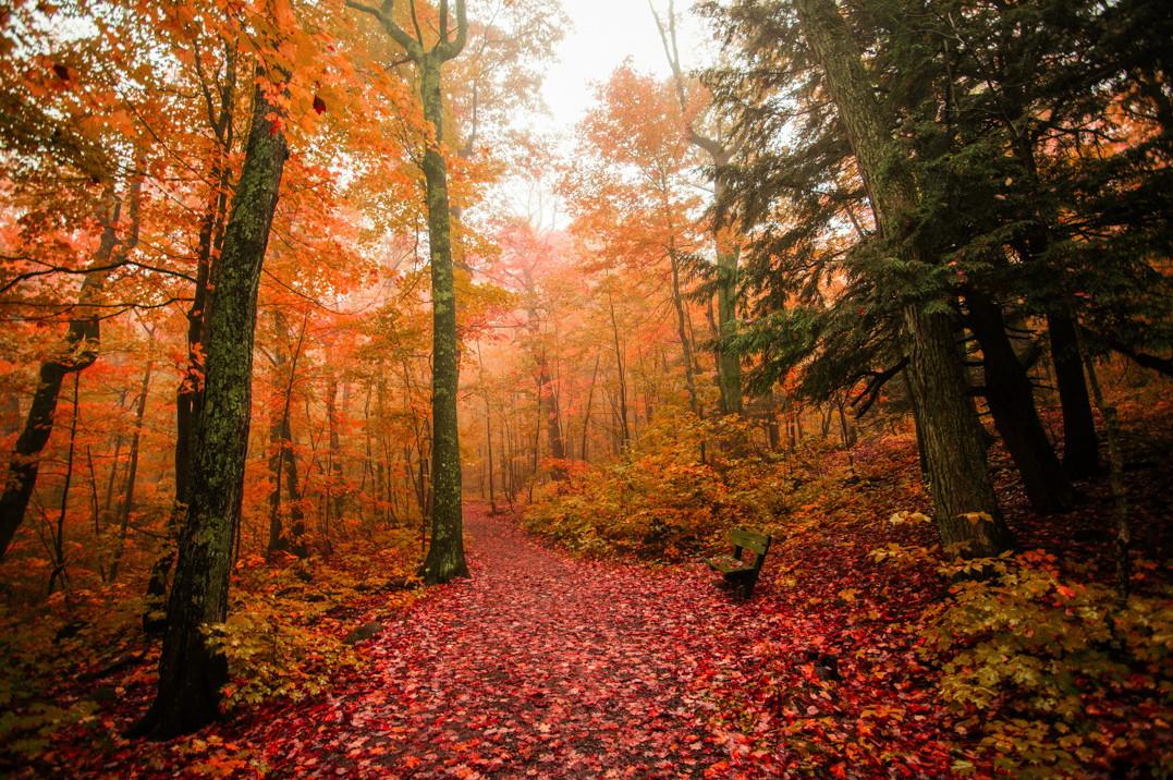 Выкиньте из головы всех чиновников, начальников, подчиненных и айда в лес!