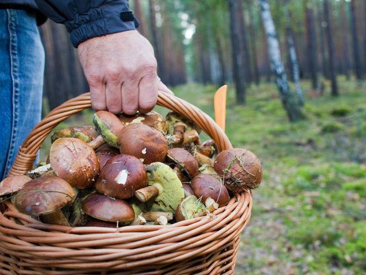 Наши леса полны грибов. Стоит ли радоваться? Примета гласит, что это – к войне