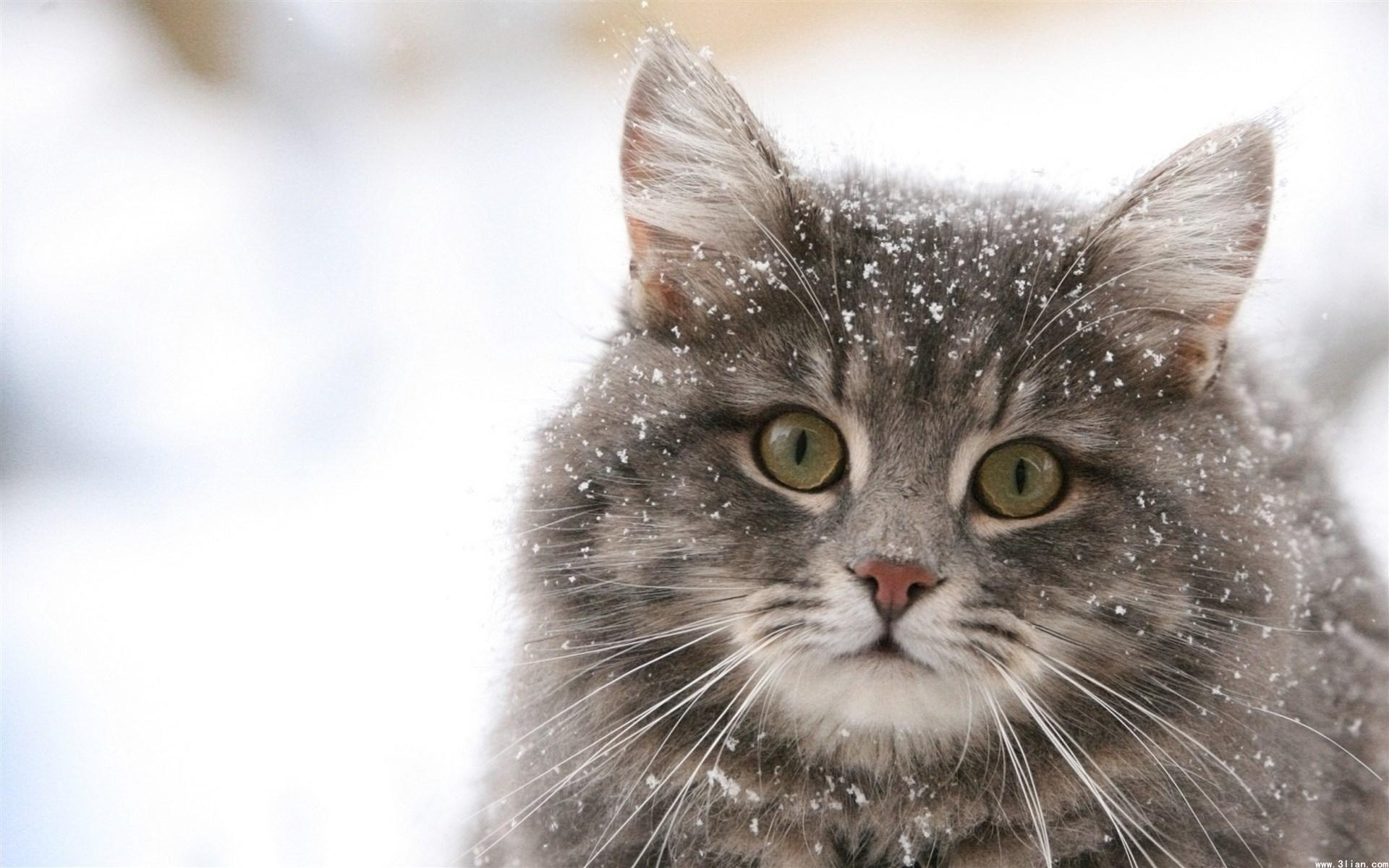 Первые заморозки в Украине: будет резкое похолодание