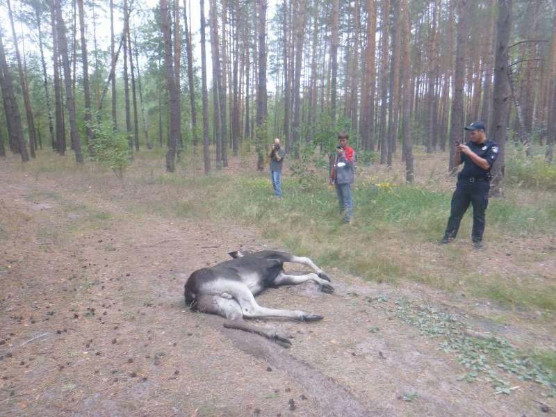 Человек и Природа: в Киеве провели масштабную операцию по спасению лося