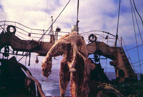 Что таится в морских глубинах: на американский пляж выбросило жуткое существо
