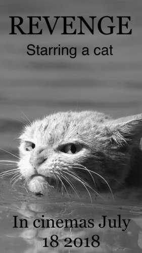 Всех порву: злой кот выжил в эпицентре урагана «Харви»