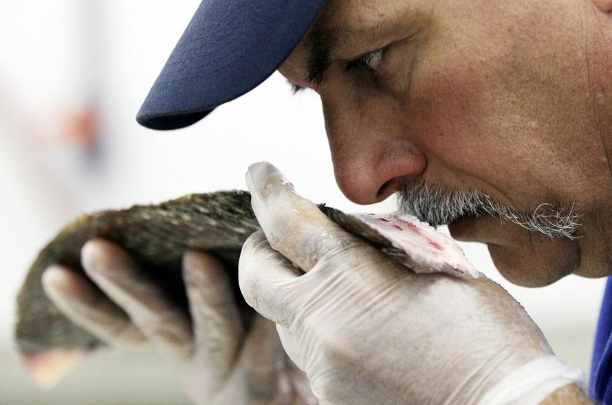 """Кушать подано: в """"Сільпо"""" обнаружили рыбу с глистами"""