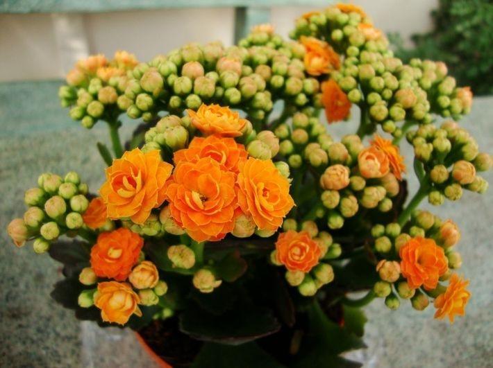 ВАЖНО! 10 домашних растений для благоприятного микроклимата в доме