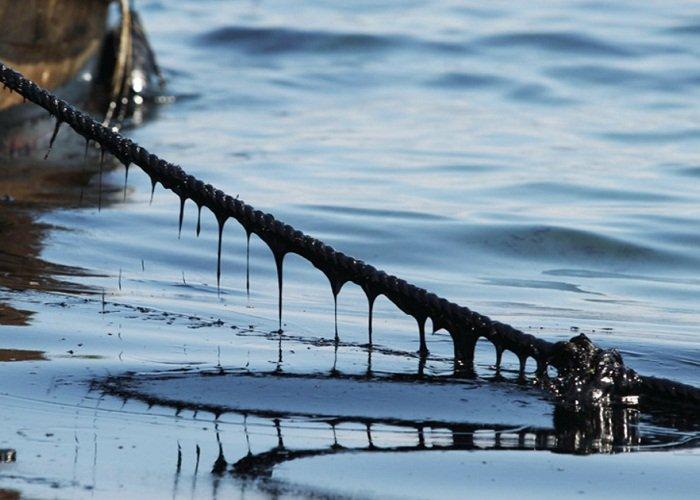 ШОК! Экологическая катастрофа Каховского водохранилища: биоресурсы под угрозой вымирания