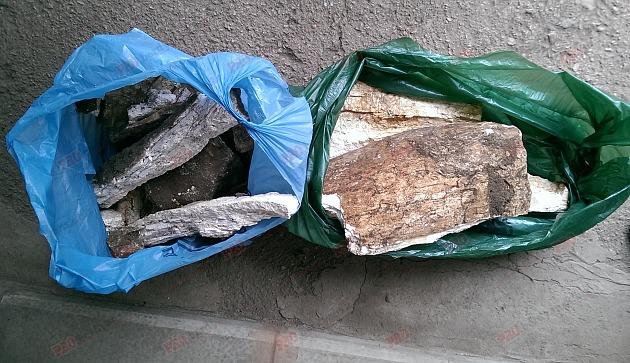 НАХОДКА! На территории детсада раскопали и сняли на видео останки древнего животного!