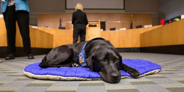 ТАКОГО ЕЩЕ НЕ БЫЛО: украинский суд разделил пополам собаку. Это не шутка