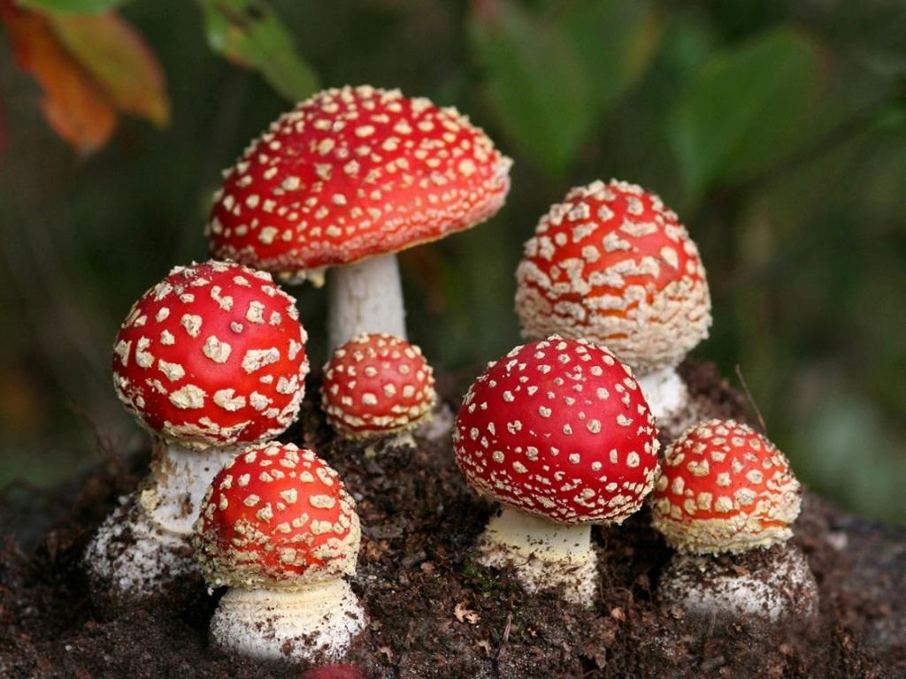 """Вот это номер: отличная новость для любителей """"галлюциногенных"""" грибов"""