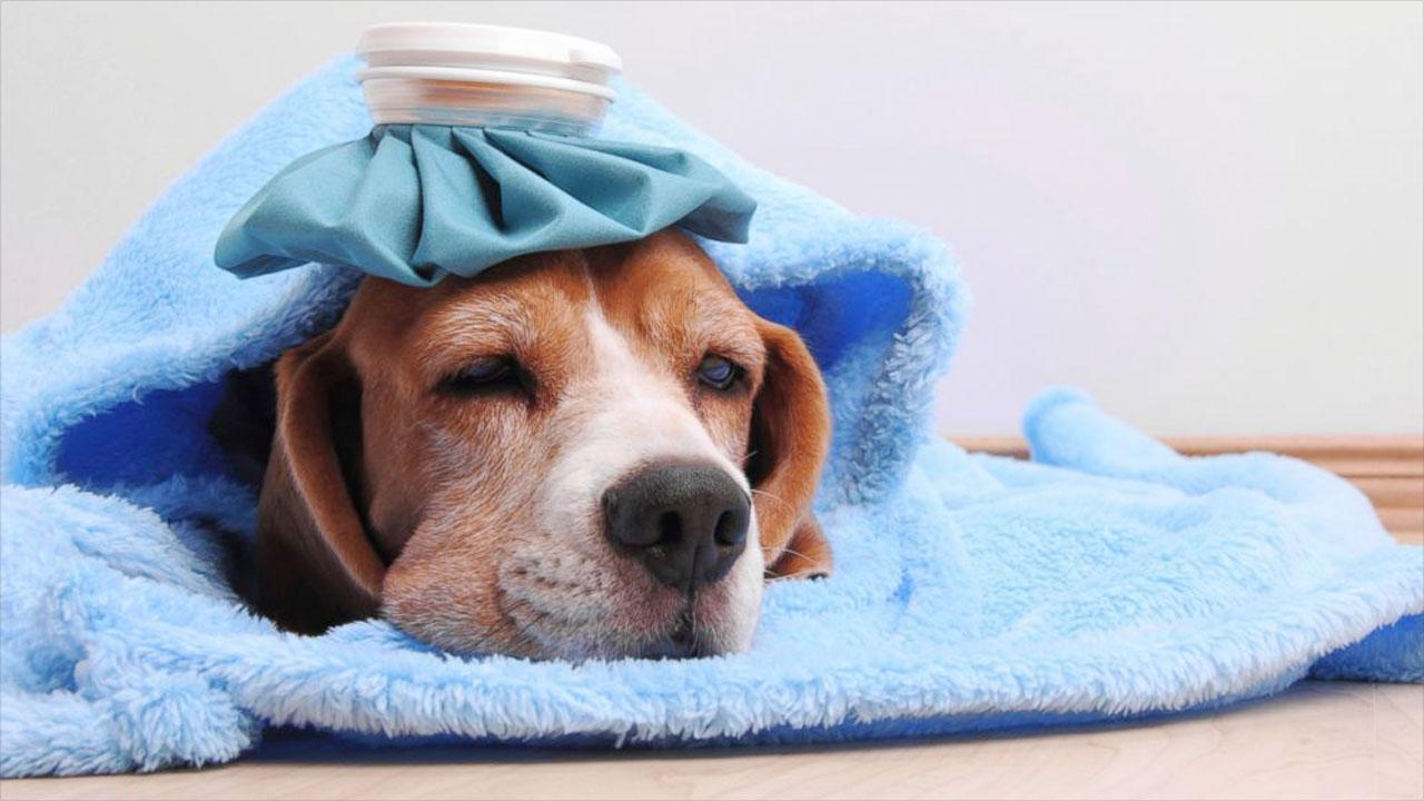 НАЧАЛОСЬ! Украинцев косит грипп, счет пошел на сотни тысяч