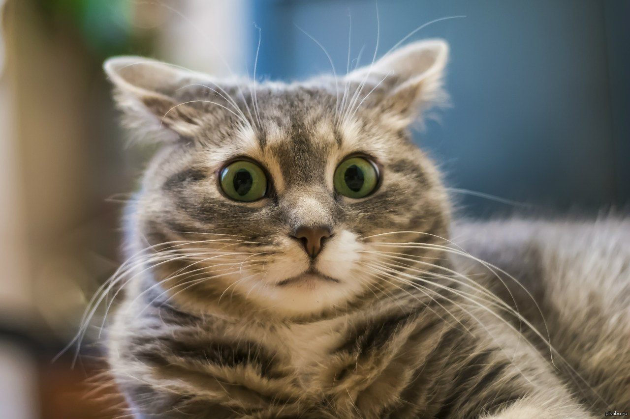 Разводят как котят: новые хитрости Гройсмана, которые вытягивают наши деньги