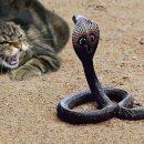 Самый крутой кот Украины: схватка со змеей