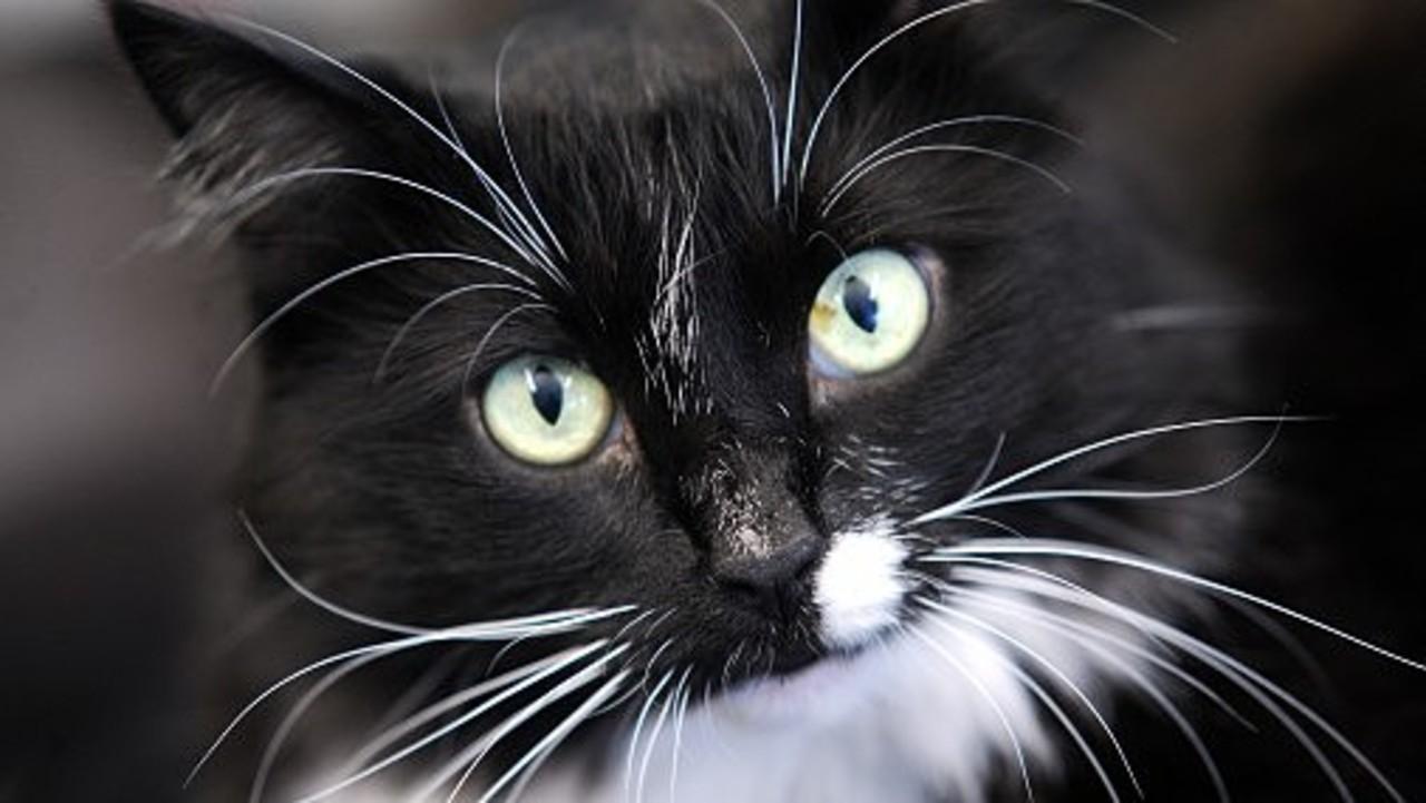 """""""Черная кошка"""" по-киевски: в столице появилась дерзкая банда, косящая под полицейских"""