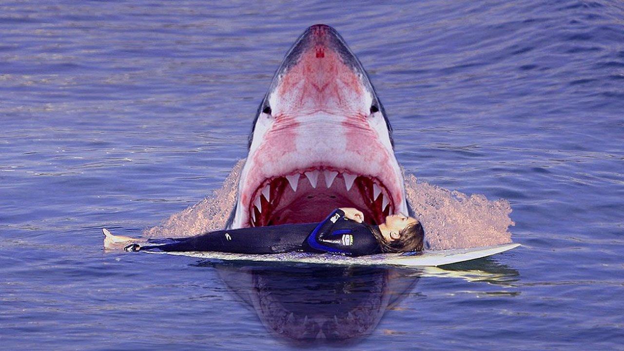 Невероятно: поразительная находка в желудке гигантской рыбы (ВИДЕО)