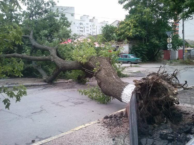ВНИМАНИЕ! Будьте осторожней: в Киеве ночью ожидают шквальный ветер!