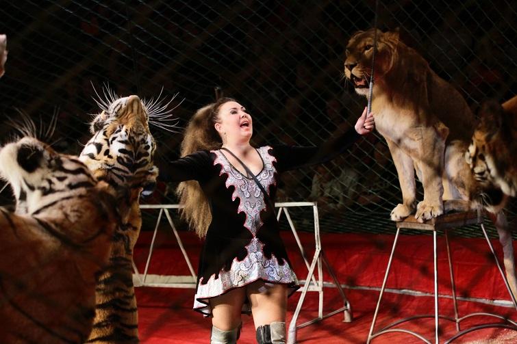 Ужасы украинских цирков: посмотрите, как издеваются над животными