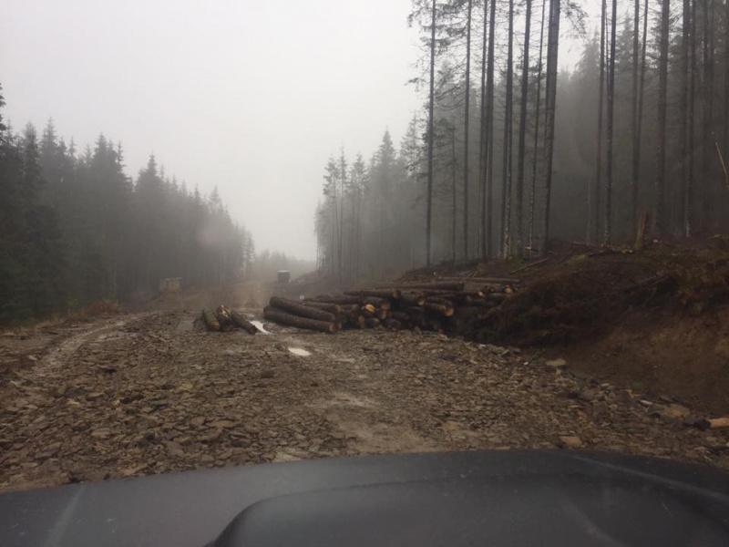 Голые Карпаты! В сети показали ужасные последствия вырубки лесов