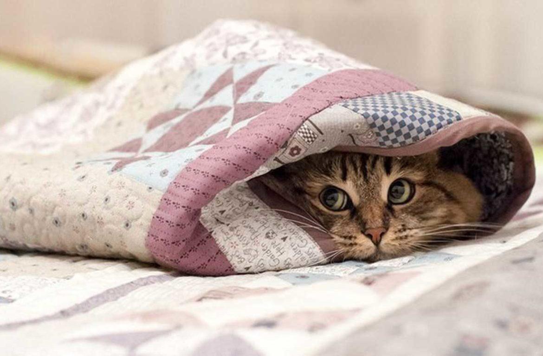 ВНИМАНИЕ: на владельцев домашних животных наложат умопомрачительные штрафы
