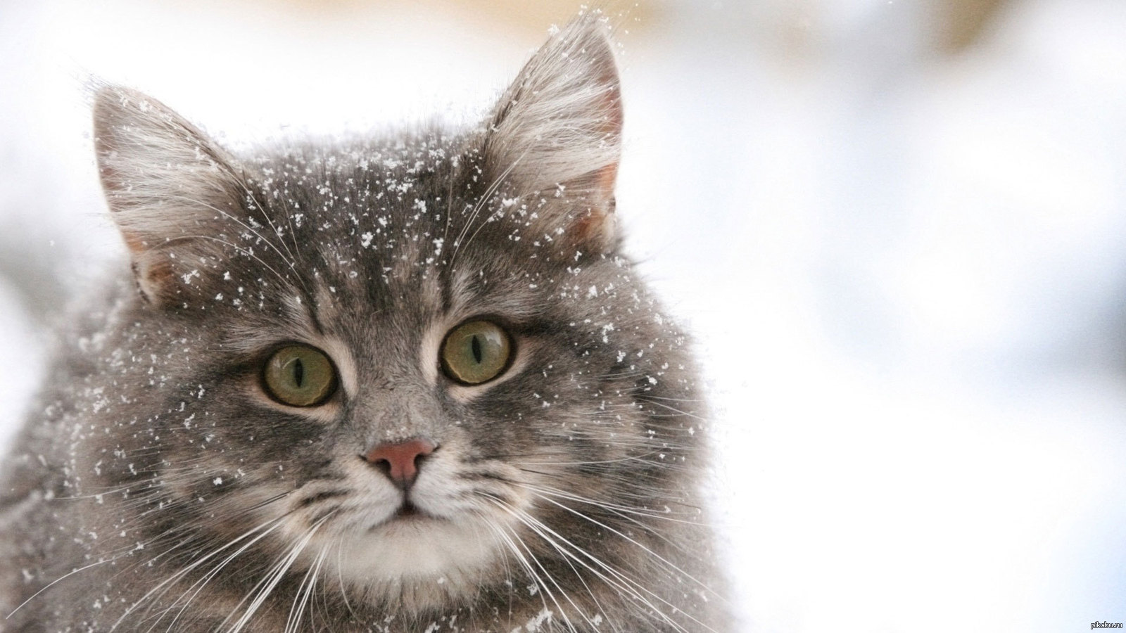 Выгонят на улицу? Под видом учета домашних животных из кармана украинцев вытянут 2 млрд. гривен