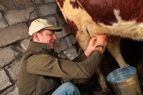 Бегать, прыгать, доить и целовать коров: политики пойдут на все, чтобы залезть в наши карманы