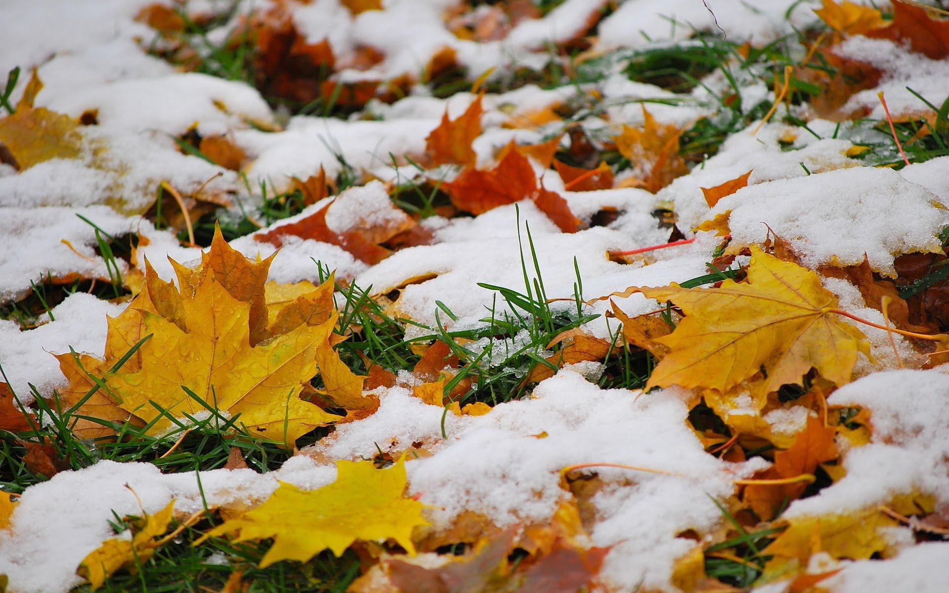 Снежный четверг! Синоптики предупредили о погодных сюрпризах