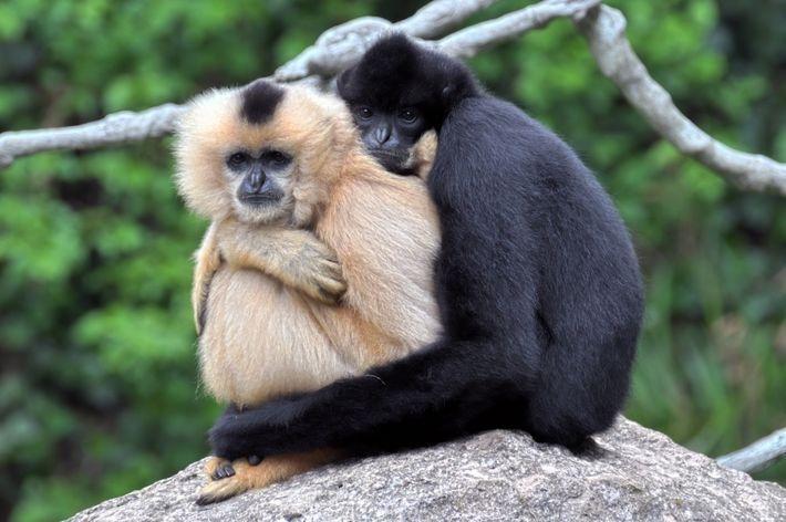 10 животных, верности и любви которых можно позавидовать