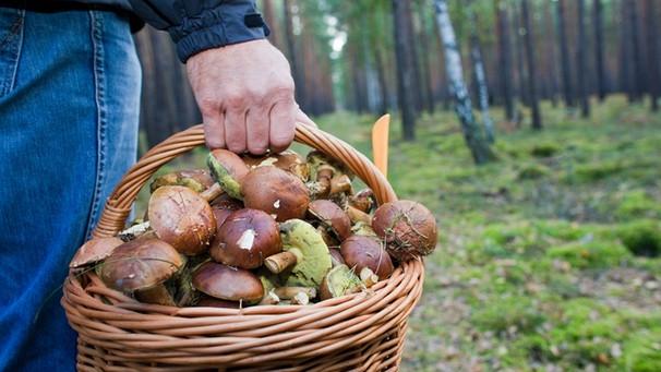 СРОЧНО! В Украине люди массово травятся грибами. Жертвы при смерти