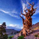 НЕОЖИДАННО! Нашли останки древнейшего дерева на Земле!