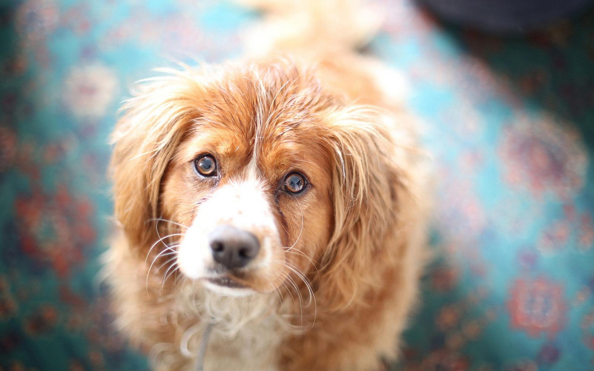 I am sorry: в Киеве собака стала причиной масштабного ДТП