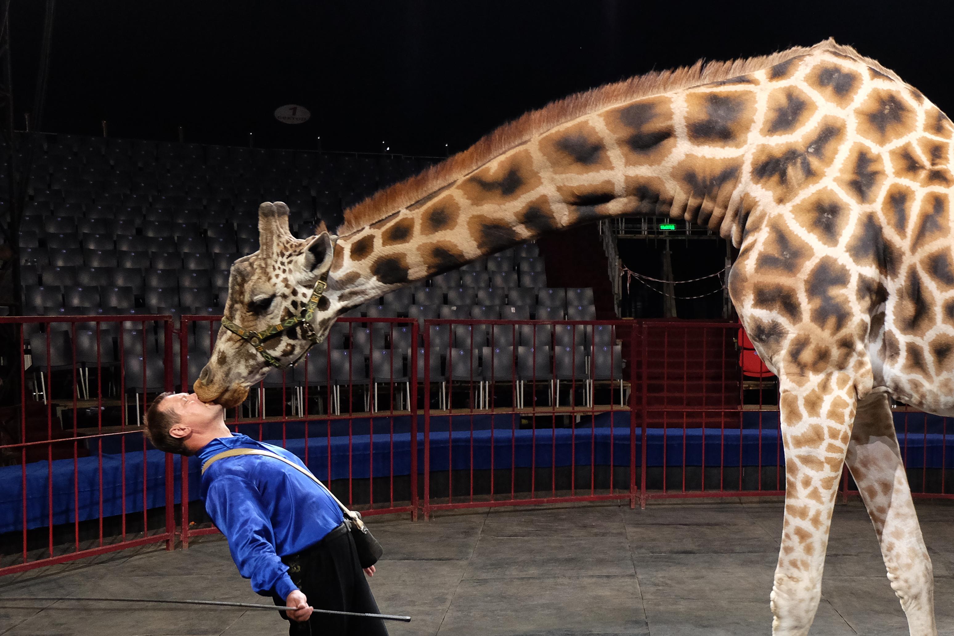 ЖИВОДЕРЫ! В зоопарке Ровно умер 10-летний жираф. Кто-то ответит?